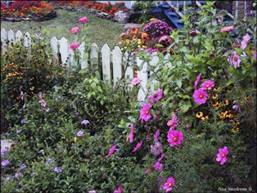 Flowers in the historic district of Eureka Springs...Click here to see the image larger
