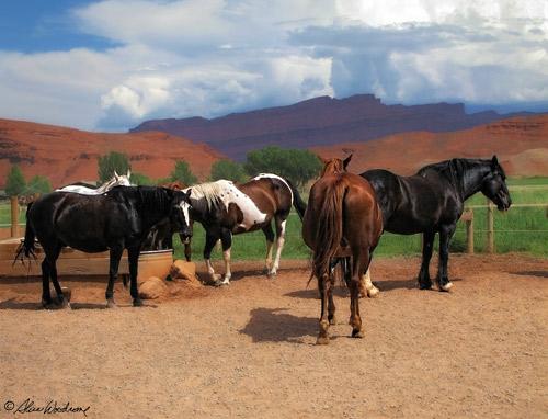 Horses at the Sorrel River Ranch