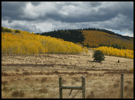aspens along the road