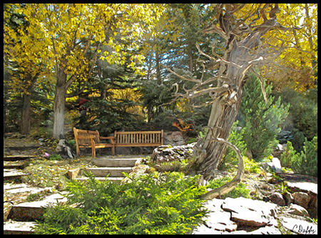 At 8,200 feet the Betty Ford Alpine Gardens are high in the Rocky Mountains. Admission to the garden is free