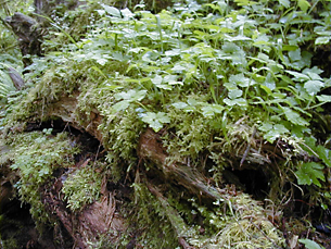 plant growth on log