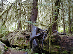 nurse log and trees