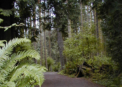 Old-Growth Forest in Rainier