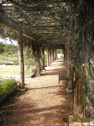 Grape arbor at the Lady Bird Johnson Wildflower Center -- click to see larger size