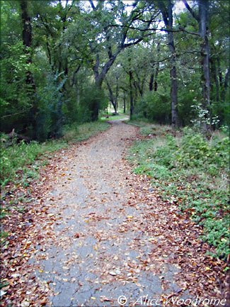 Onion Creek Trail at McKinney Falls State Park -- click to see larger size