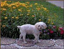 Annie in the Garden