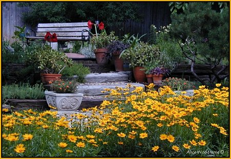 View of the Garden with Coreopsis