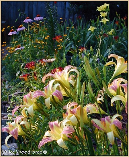 Garden with Lilies