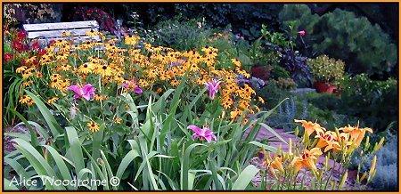 Garden in Early July