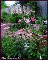 Pink Lily Garden