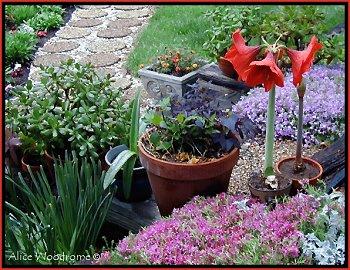 pots on garden steps