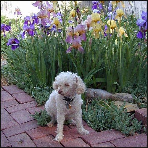 Annie and Irises