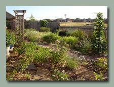 The Back Garden in August