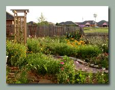 Back Garden June 4