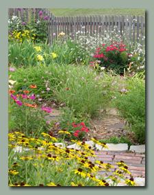 Back Garden in June