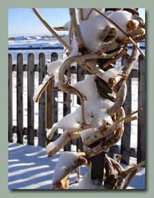 Janurary Snow