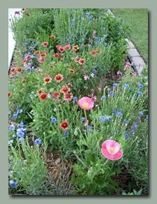 Prairie Garden along Driveway
