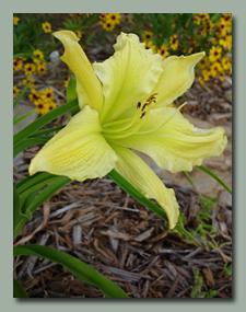 Green Flutter