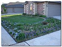 Front garden long shot