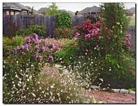 Late September Back Garden